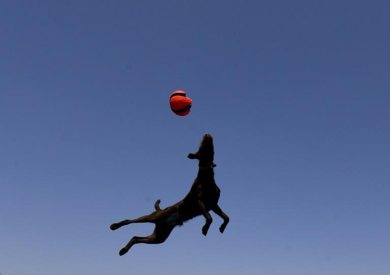 Brazil is the world's second-biggest market for dog food after the United States, and the third for pet food in general