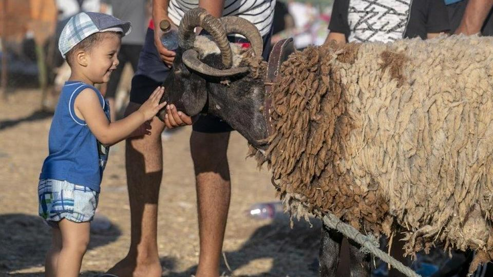 Tunisians are getting ready to celebrate Eid by shopping at a livestock market in the capital, Tunis, on Wednesday.