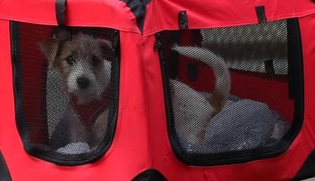UK PM Johnson to the rescue: girlfriend adopts a rescue puppy
