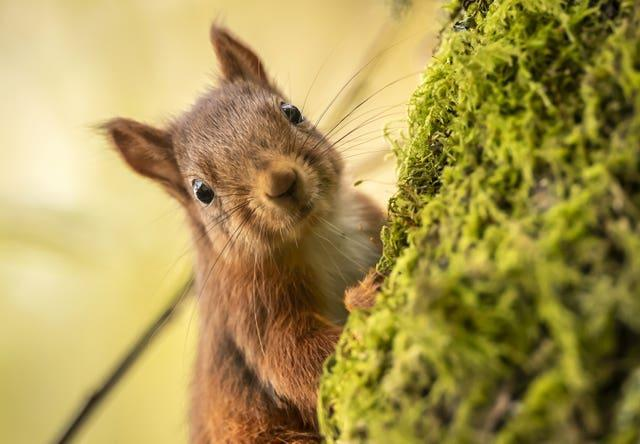 Red squirrels have made their home at Snaizeholme (Danny Lawson/PA)