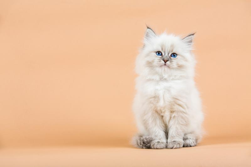 Feline fans rejoice: this toy will keep your fluff ball occupied for hours. (Photo: Getty Images)