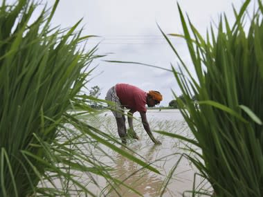 Excess rain during 2019 monsoon damaged 32 lakh hectares of agricultural land in 12 states, says Skymet report