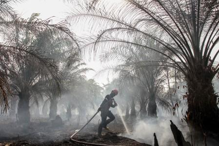 A member of Manggala Agni tries to extinguish peatland fires at a palm plantation in Pekanbaru