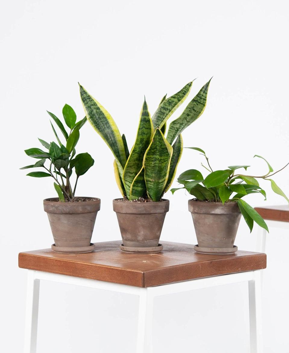 <p>The <span>Bloomscape Tough Stuff Collection</span> ($65) is perfect for new graduates because they're some of the easier plants to manage, and they'll make their living space feel more homey.</p>