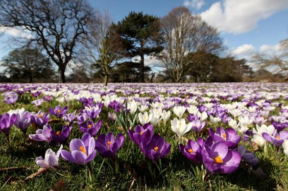 Flowers in spring (Getty Images)