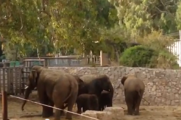 Elephants shield young as bomb sirens go off near Tel Aviv zoo
