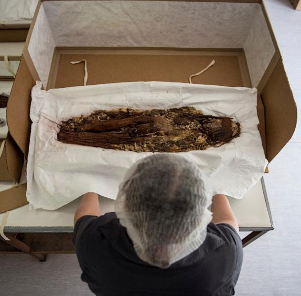 Chilean anthropologist Veronica Silva shows one of the mummies from the ancient Chinchorro culture at the National Museum of Natural History in Santiago (AFP Photo/Martin BERNETTI)
