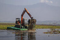 A de-weeding machine removes weeds and lotus lilies at Dal lake in Srinagar, Indian controlled Kashmir, Tuesday, Sept. 14, 2021. Weeds, silt and untreated sewage are increasingly choking the sprawling scenic lake, which dominates the city and draws tens of thousands of tourists each year. (AP Photo/Mukhtar Khan)