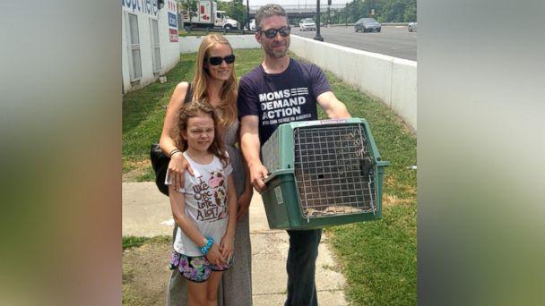 PHOTO: Symba the 35-pound cat has been adopted by Kiah Berkeley and Peter Sorkin of Mount Rainier, Maryland. (Humane Rescue Alliance)