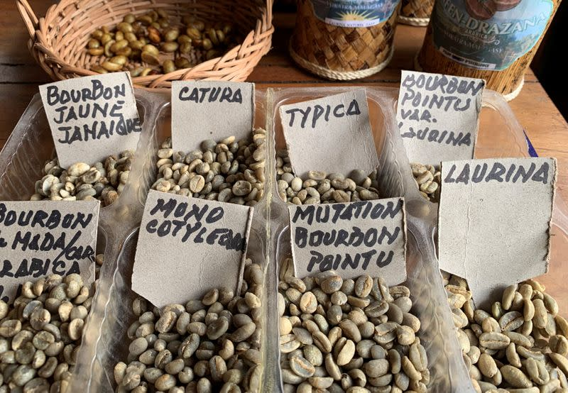 Samples of Bourbon pointu coffee variety are seen arranged at the Kafen Drazana packaging plant in Ampefy town of Itasy region
