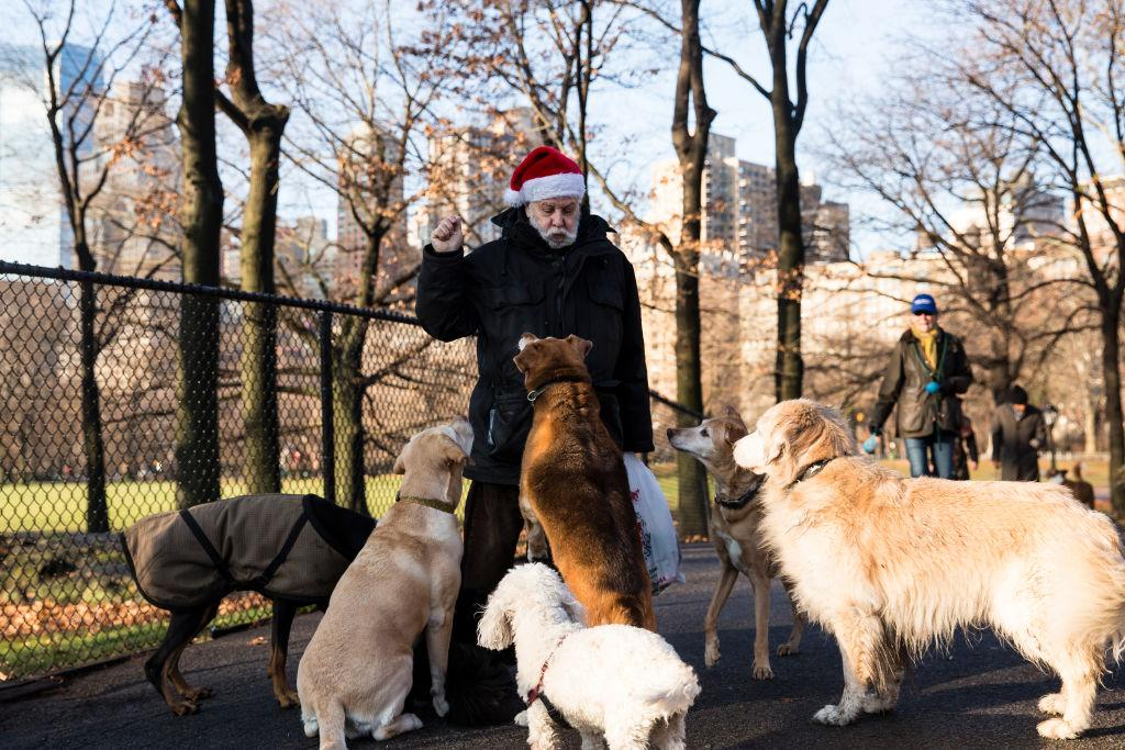 <p>Larry, in a Santa hat plays with dogs in Central Park in New York City. The streets of New York is at festive spirit on Christmas day as thousand of tourists visit the city for the holidays (Amir Levy/Getty Images) </p>