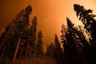A dead tree (L) stands alongside living trees as smoke rises during the KNP Complex fire in the Sequoia National Forest near Red Fir, California on September 17, 2021 (AFP/Patrick T. FALLON)