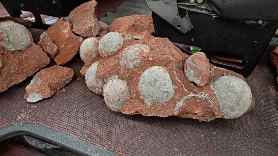 Fossilized Dinosaur Eggs Discovered at Chinese Construction Site (ABC News)