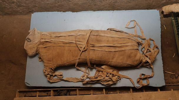 PHOTO: Egypt unveiled on Saturday what it described as 'one of a kind' discovery of a cache containing hundreds of statues and mummified animals. (Ministry of Antiquities)
