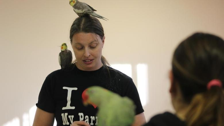 Who's a clever bird? Calgary school trains feathered friends