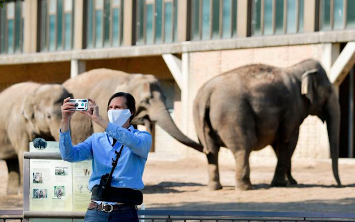 A wearing a face mask takes a selfie in front of elephants on April 28, 2020 in Berlin's Zoo as it partially reopens for the public amid the novel coronavirus Covid-19 pandemic. (Photo by Tobias SCHWARZ / AFP) (Photo by TOBIAS SCHWARZ/AFP via Getty Images) - TOBIAS SCHWARZ/AFP