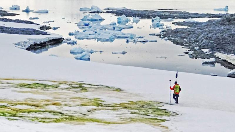Green blooms: Patches of Antarctica's snow is turning green with algae due to global warming