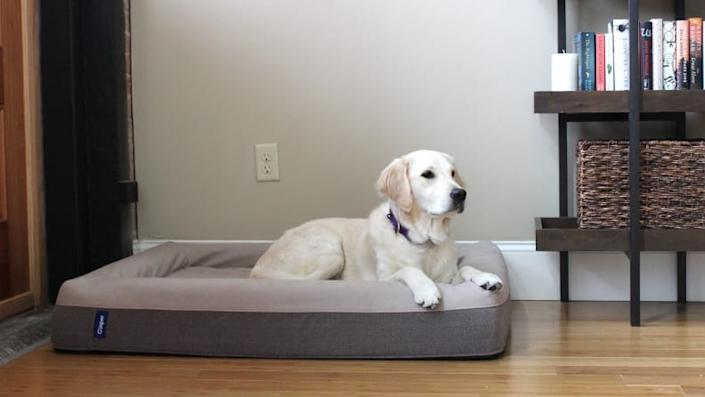Addy absolutely loves her Casper Dog Bed--and so does our cat!