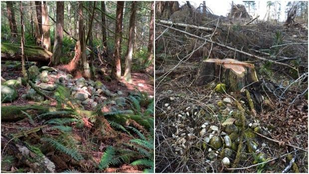 Images show a shíshál burial site on the east side of Sechelt Inlet, north of Vancouver on B.C.'s Sunshine Coast, before and after logging. A former shíshál nation band councillor hopes someone will be held accountable for the damage to the site, which he calls