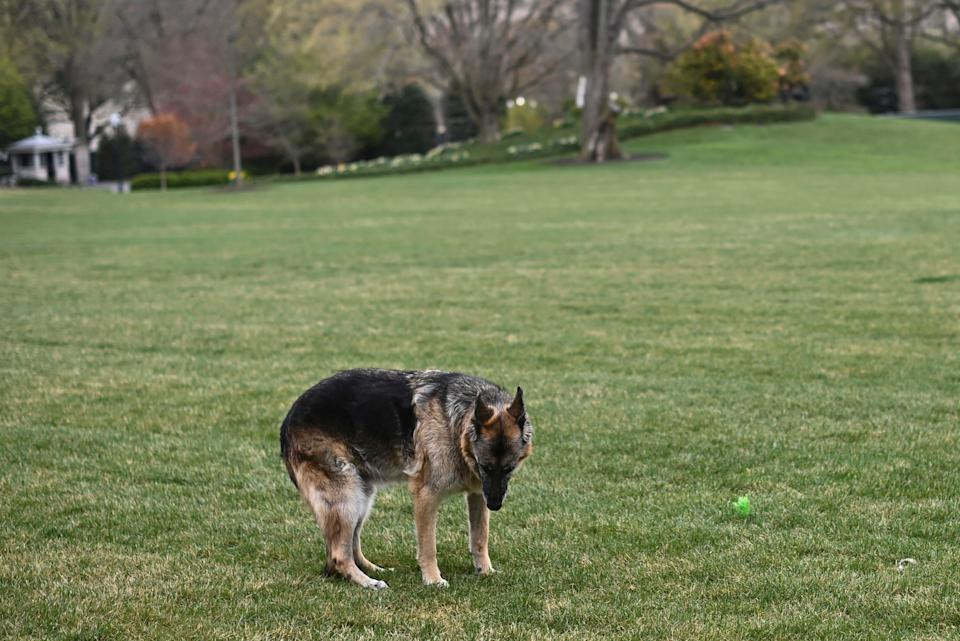 Champ Biden on the South Lawn of the White House, March 31, 2021.
