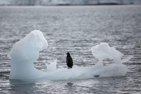 FILE PHOTO: A penguin stands on an iceberg in Yankee Harbour, Antarctica, February 18, 2018. Reuters/Alexandre Meneghini/File Photo
