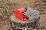 """<p>The best way to spread Christmas cheer is singing loud for all to meerkat. The furry pals at ZSL London Zoo g<a href=""""https://people.com/pets/london-zoo-meerkats-use-tiny-mailbox-letter-to-santa/"""" rel=""""nofollow noopener"""" target=""""_blank"""" data-ylk=""""slk:ot their own letters to Santa mailbox"""" class=""""link rapid-noclick-resp"""">ot their own letters to Santa mailbox</a> to send along their Christmas wishes. (And they'll probably get what they asked for: The mailbox is filled with crickets!)</p>"""