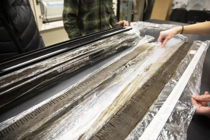 Two long, thin cores of mud marked with a line every half-centimeter for analysis.