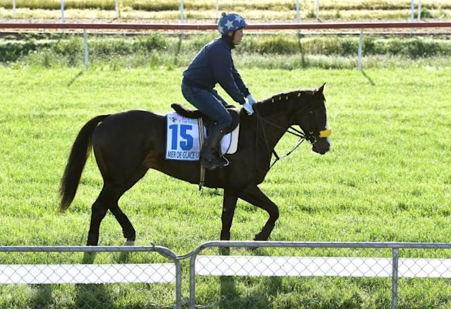Japanese horse Mer De Glace trots during early morning trackwork at Werribee on Monday ahead of the Melbourne Cup on November 5 (AFP Photo/William WEST)