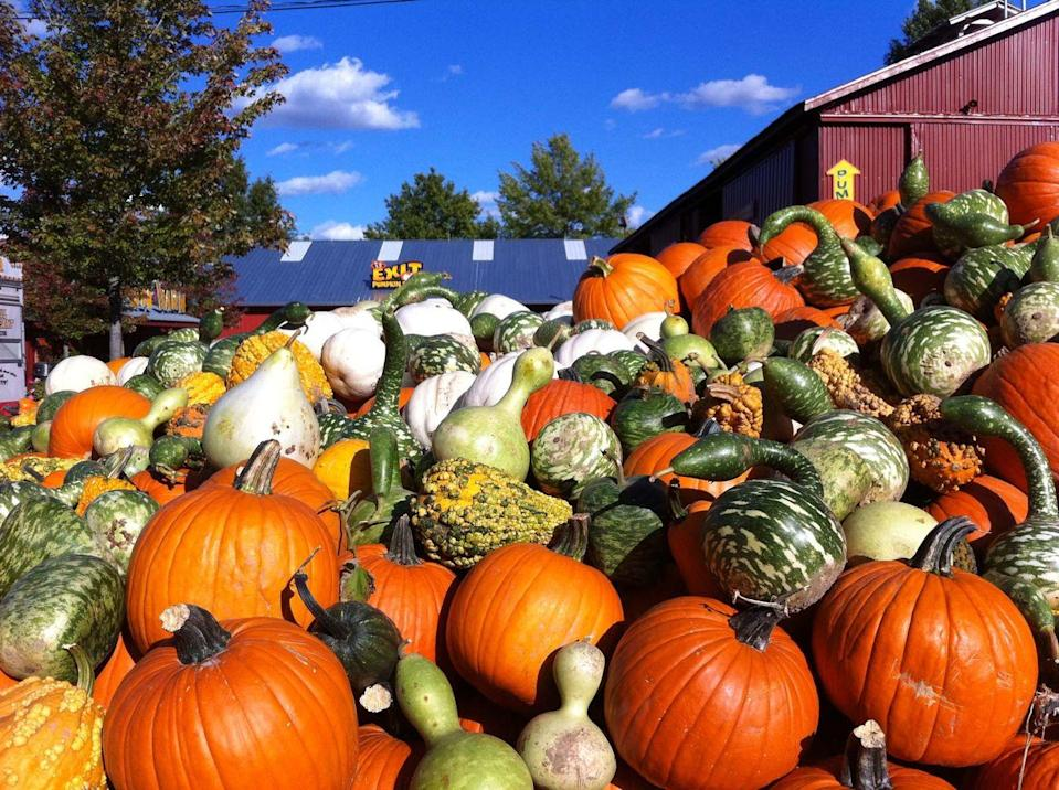 """<p><strong>Homer Glen, Illinois</strong><strong> (Sept 10–Oct 31)</strong></p><p>People in the Chicago area flock to <strong><a href=""""https://pumpkinfarm.com/"""" rel=""""nofollow noopener"""" target=""""_blank"""" data-ylk=""""slk:Bengtson's Pumpkin Farm and Fall Fest"""" class=""""link rapid-noclick-resp"""">Bengtson's Pumpkin Farm and Fall Fest</a> </strong>each year for apple cider donuts, award-winning barbecue, and activities (not to mention, pumpkins) galore. Hop on a tractor-pulled hayrack ride, visit the petting zoo, or take a spin on any of their fun carnival rides — including the Barnyard Dance Cow Coaster! Tickets for guests ages 2 and older start at $16.99.</p>"""