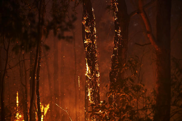 COLO HEIGHTS, AUSTRALIA - NOVEMBER 15: A bushfire is seen along Putty Road on November 15, 2019 in Colo Heights, Australia. The warning has been issued for a 80,000-hectare blaze at Gospers Mountain, which is burning in the direction of Colo Heights. An estimated million hectares of land has been burned by bushfire across Australia following catastrophic fire conditions - the highest possible level of bushfire danger - in the past week. A state of emergency was declared by NSW Premier Gladys Berejiklian on Monday 11 November and is still in effect, giving emergency powers to Rural Fire Service Commissioner Shane Fitzsimmons and prohibiting fires across the state. Four people have died following the bushfires in NSW this week. (Photo by Brett Hemmings/Getty Images)