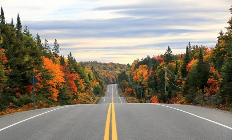 Image of a road with autumn trees in the periphery.