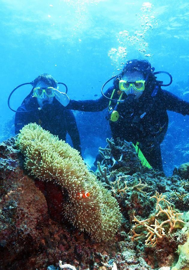 Be team scuba diving at Nursery Bommie out on the Agincourt Reef in Port Douglas. Source: Tourism Queensland