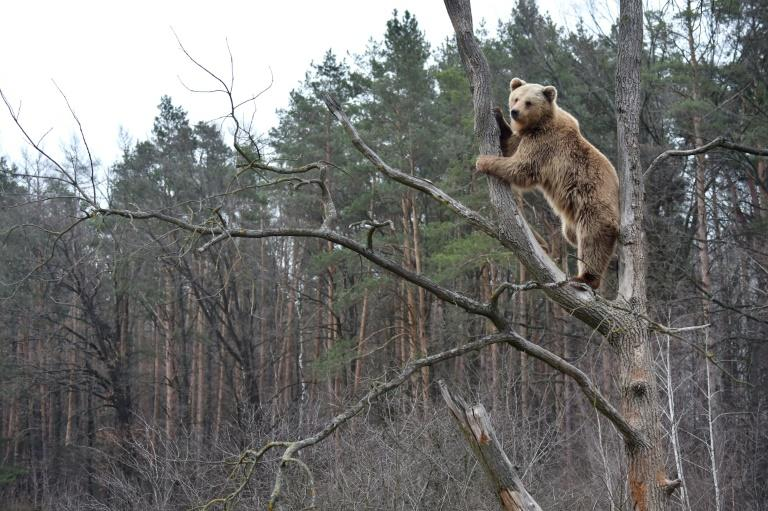 A shelter for bears rescued after years of torture in circuses has become a popular tourist site near the city of Zhytomyr, Ukraine