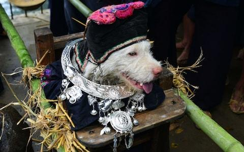 Dog Carrying Day: Behold the Chinese festival where villagers worship pooches on a throne for one day