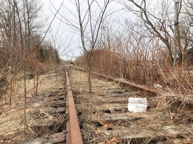 Trees are seen growing between the ties on Cape Breton and Central Nova Scotia Railway tracks earlier this month in Sydney.