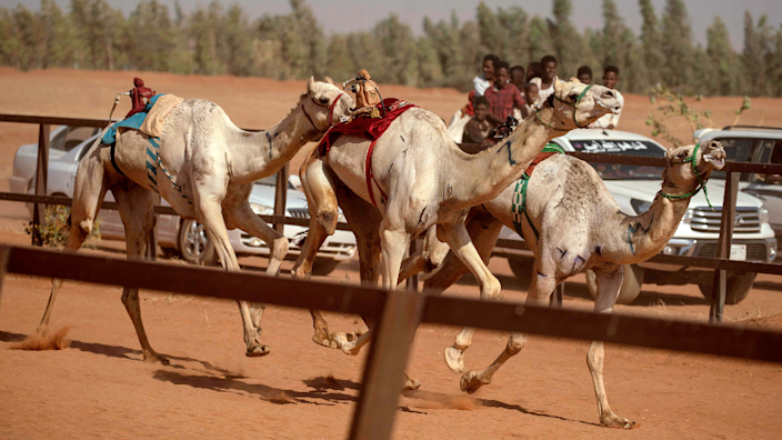 People cheer from the back of a truck during a camel race at a track near Omdurman, Sudan - Friday 19 March 2021