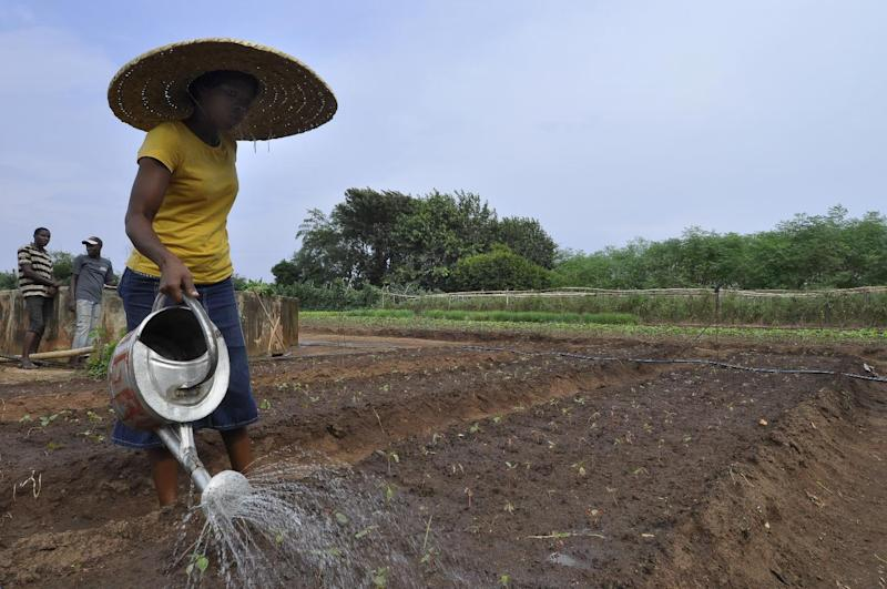 A woman waters plants at the Centre Songhai, an organic farm in Porto Novo, Benin, on January 30, 2014 (AFP Photo/Charles Placide Tossou)