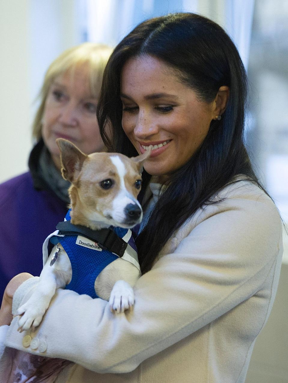 """<h1 class=""""title"""">The Duchess Of Sussex Visits Mayhew</h1> <div class=""""caption""""> Markle meeting Minnie the Jack Russell during a visit to the Mayhew in January 2019 </div> <cite class=""""credit"""">WPA Pool</cite>"""