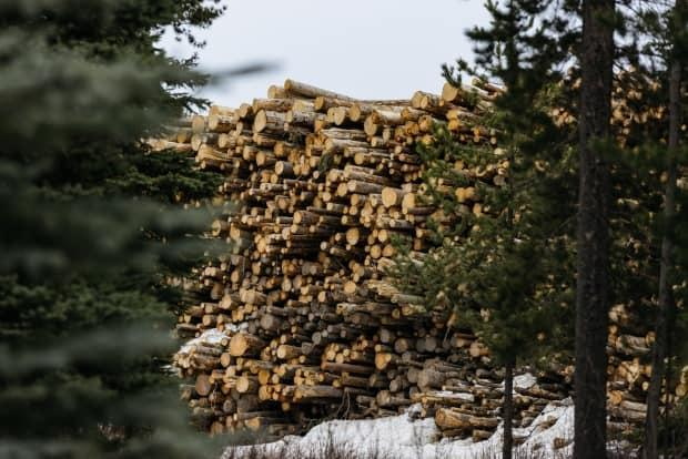 A wall of logs that will become wood pellets sits at a mill in Houston, B.C.