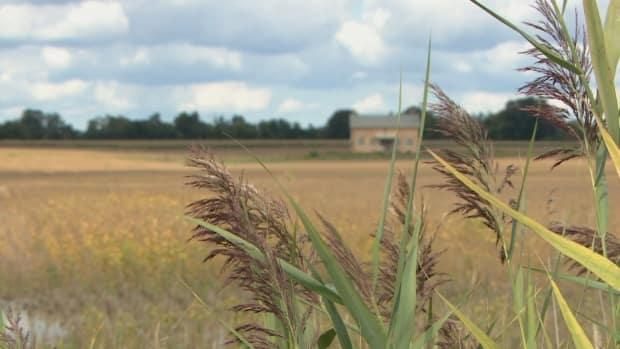 Staff are recommendingYork Regional Council approve an intensification growth rate of between 50 and 55 per cent— leaving some residents worried about what that could mean for the land. (Sue Reid/CBC - image credit)
