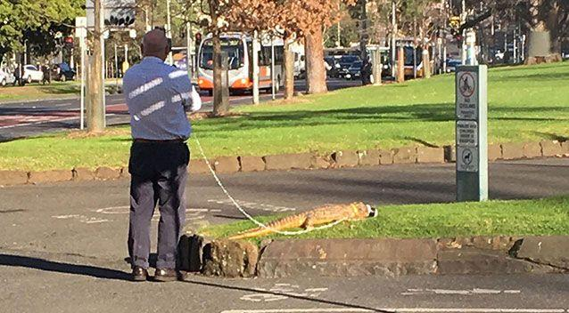 A muzzled crocodile was photographed appearing to take a walk on a leash in a popular Melbourne park. Picture: Reddit
