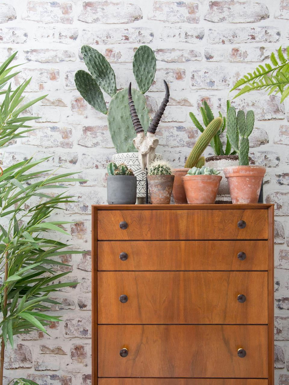 Garden trends succulents on chest of drawers