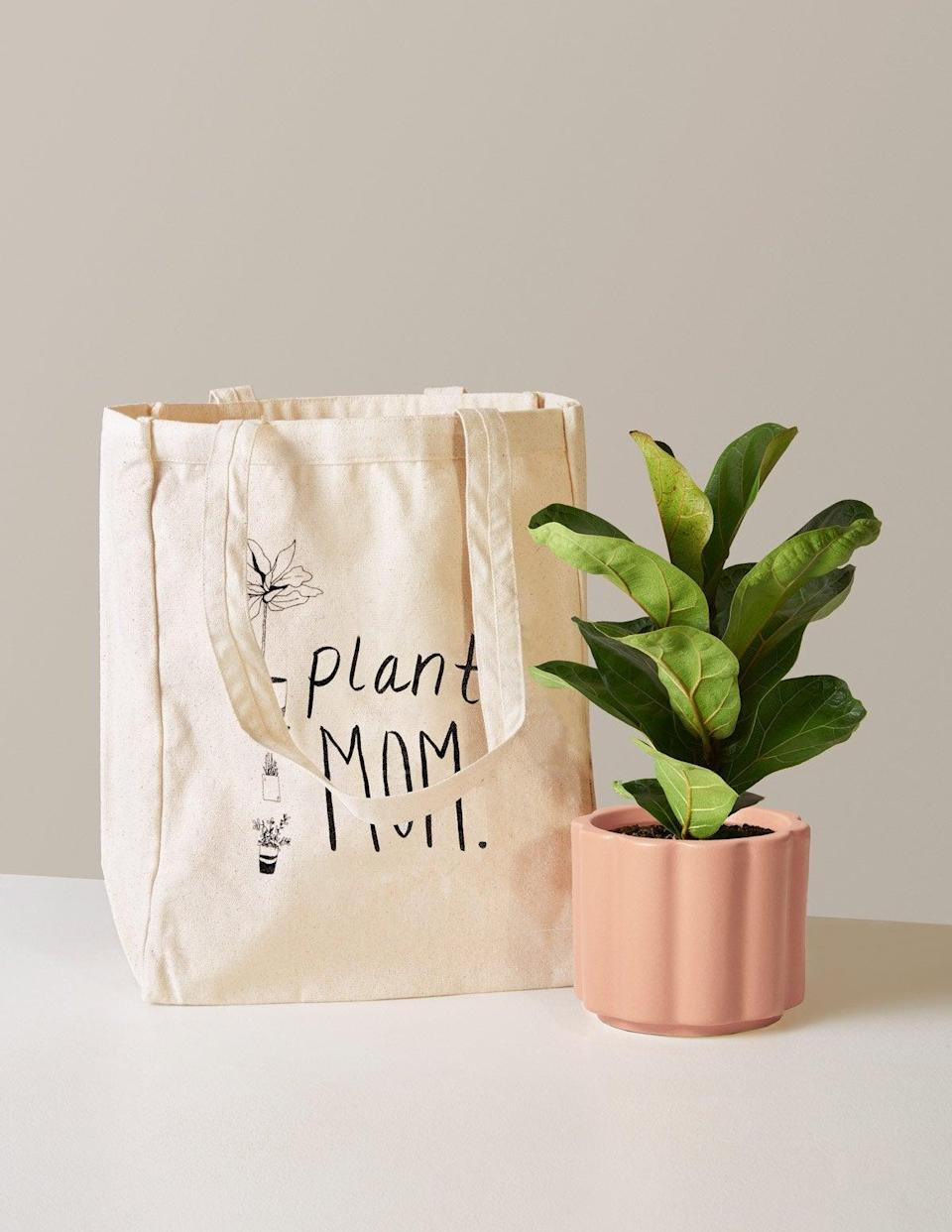 """<h3><h2>Fiddle Leaf Fig </h2></h3><br><strong>Why She'll Love It</strong><br>Pair this on-trend houseplant in a blush-pink ceramic pot with the <a href=""""https://www.thesill.com/products/plant-mom-tote-bag"""" rel=""""nofollow noopener"""" target=""""_blank"""" data-ylk=""""slk:""""Plant Mom"""" tote"""" class=""""link rapid-noclick-resp"""">""""Plant Mom"""" tote</a> for the ultimate green thumb gift set. <br><br><strong>Care</strong><br>Fiddle leaf figs love anything from bright indirect to full sunlight showers with a watering every one to two weeks and fully dried out soil in between. <br><br><em>Shop</em><strong><em> <a href=""""https://www.thesill.com/collections/mothers-day-plant-gifts-delivery"""" rel=""""nofollow noopener"""" target=""""_blank"""" data-ylk=""""slk:The Sill"""" class=""""link rapid-noclick-resp"""">The Sill</a></em></strong><br><br><strong>The Sill</strong> Plant Mom Tote Bag, $, available at <a href=""""https://go.skimresources.com/?id=30283X879131&url=https%3A%2F%2Fwww.thesill.com%2Fproducts%2Fplant-mom-tote-bag"""" rel=""""nofollow noopener"""" target=""""_blank"""" data-ylk=""""slk:The Sill"""" class=""""link rapid-noclick-resp"""">The Sill</a><br><br><strong>The Sill</strong> Fiddle Leaf Fig, $, available at <a href=""""https://go.skimresources.com/?id=30283X879131&url=https%3A%2F%2Fwww.thesill.com%2Fproducts%2Ffiddle-leaf-fig%3Fvariant%3D39335821312105"""" rel=""""nofollow noopener"""" target=""""_blank"""" data-ylk=""""slk:The Sill"""" class=""""link rapid-noclick-resp"""">The Sill</a>"""