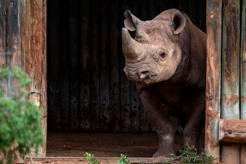 Rhino were recently reintroduced to Zakouma National Park - Credit: Kyle de Nobrega
