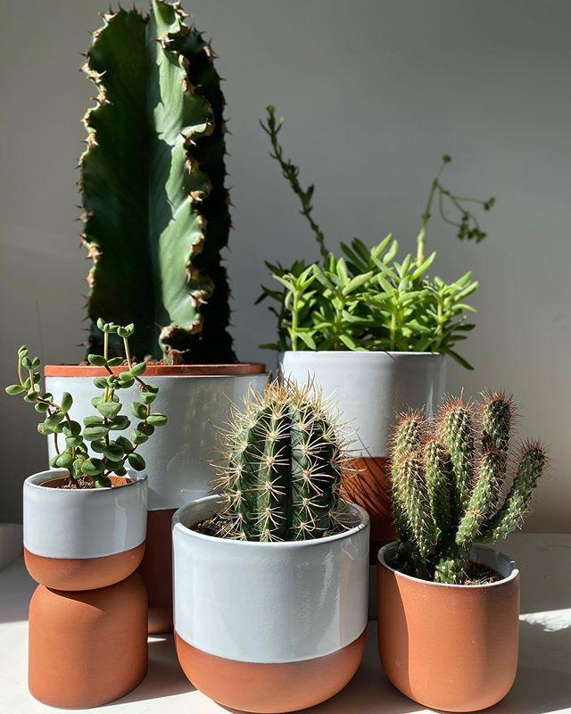 "<p>Founded by Gynelle Leon, PRICK is London's first boutique entirely dedicated to cacti and succulents. if you're looking for high quality, low maintenance plants, head to <a href=""https://www.prickldn.com/"" rel=""nofollow noopener"" target=""_blank"" data-ylk=""slk:prickldn.com"" class=""link rapid-noclick-resp""><strong>prickldn.com</strong></a>. It's perfect, even for the not-so green-fingered. You can also buy beautiful plant pots and plant books.</p><p><a href=""https://www.instagram.com/p/B-zdxLPJs0o/"" rel=""nofollow noopener"" target=""_blank"" data-ylk=""slk:See the original post on Instagram"" class=""link rapid-noclick-resp"">See the original post on Instagram</a></p>"