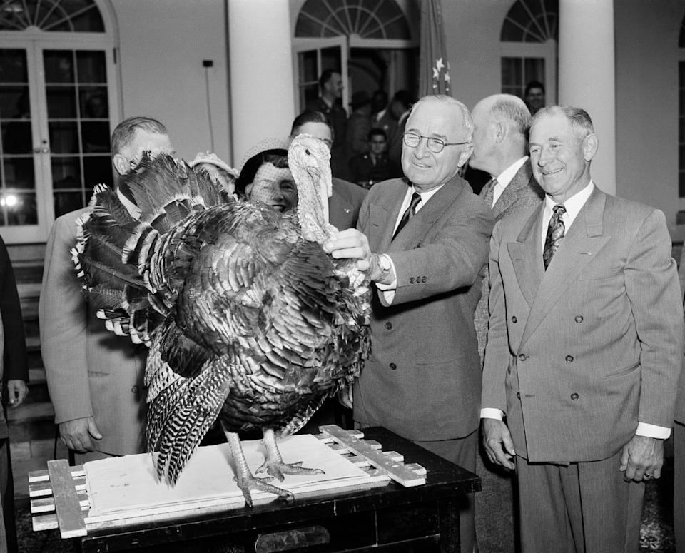 President Harry S. Truman squints as he fingers the wattle of a 35-pound Tom turkey from Oregon as it is presented to him, in the White House Rose Garden on Nov. 18, 1952. The turkey, intended for the president's last Thanksgiving in the White House, was made by representatives of the Poultry and Egg National Board and the National Turkey Federation. At right is Loren Johnson, of Corvallis, Ore., one of the group making the presentation. (Photo: Henry Griffin/AP)