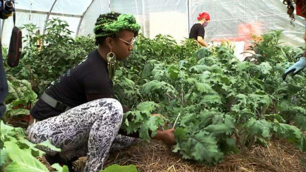 PHOTO: Members of the Black Urban Gardeners and Farmers of Pittsburgh Co-Op tend to their crops at the Homewood Historical Urban Farm in of Pittsburgh, September 2020. (ABC News)