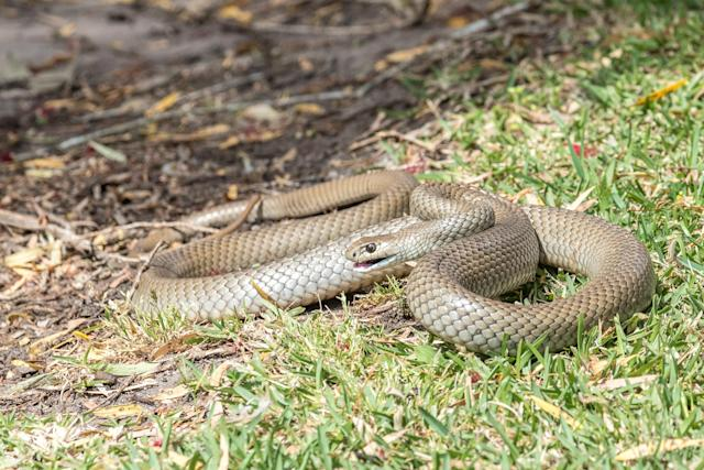 Snake bites are on the rise. (Photo: Getty Images)