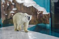 In the wild, polar bears usually roam territories that can span thousands of miles