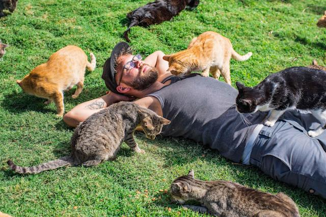 <p>Andrew Marttila, 32, is inspected by rescued cats at the Lanai Cat Sanctuary in Hawaii. (Photo: Andrew Marttila/Caters News) </p>
